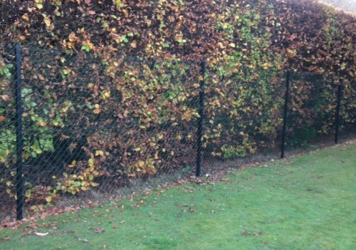 Dog proof chain link fence Buckinghamshire